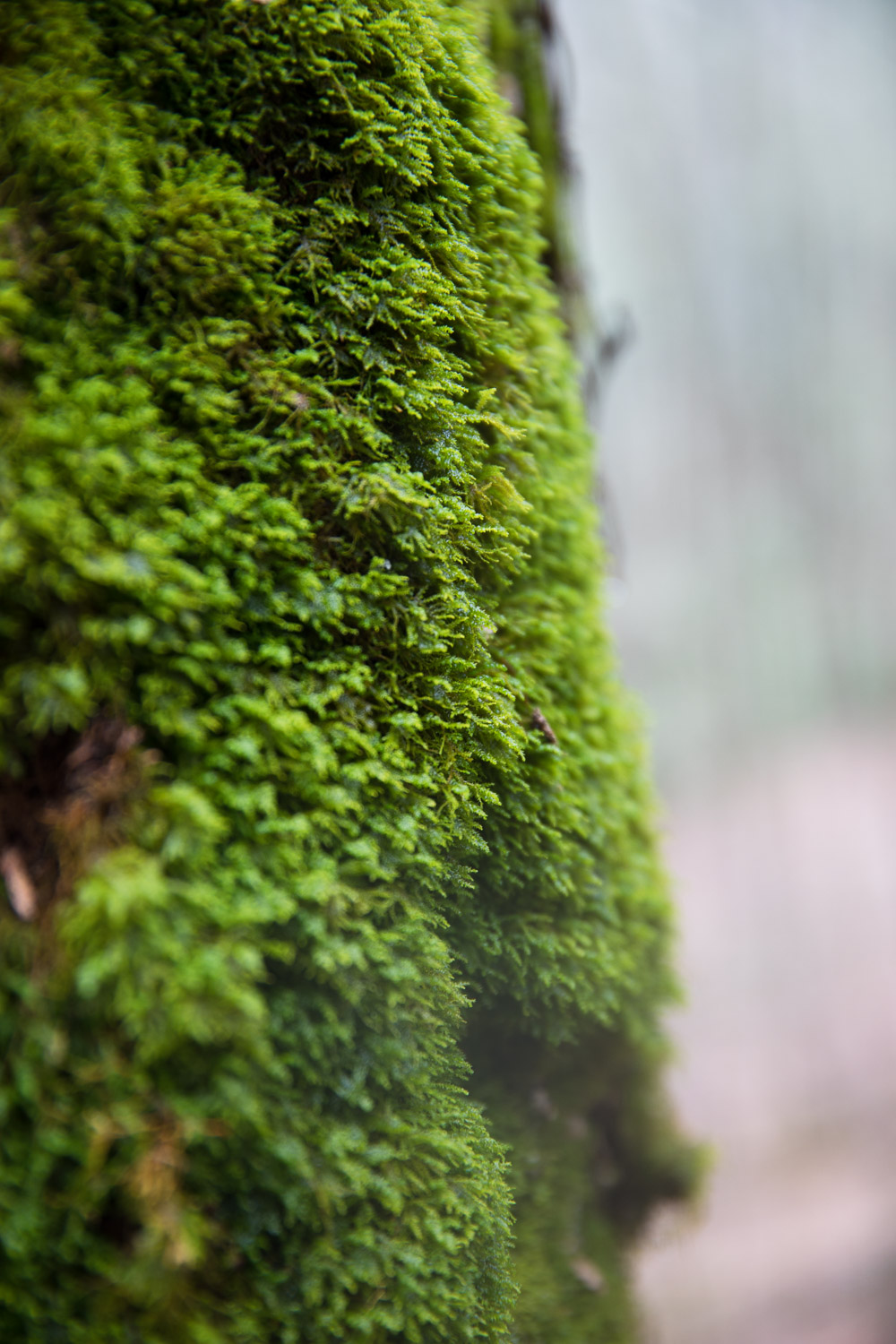 Moss on AT