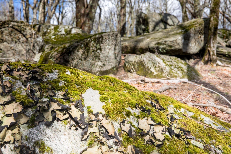 Bluff Mountain on Appalachian Trail