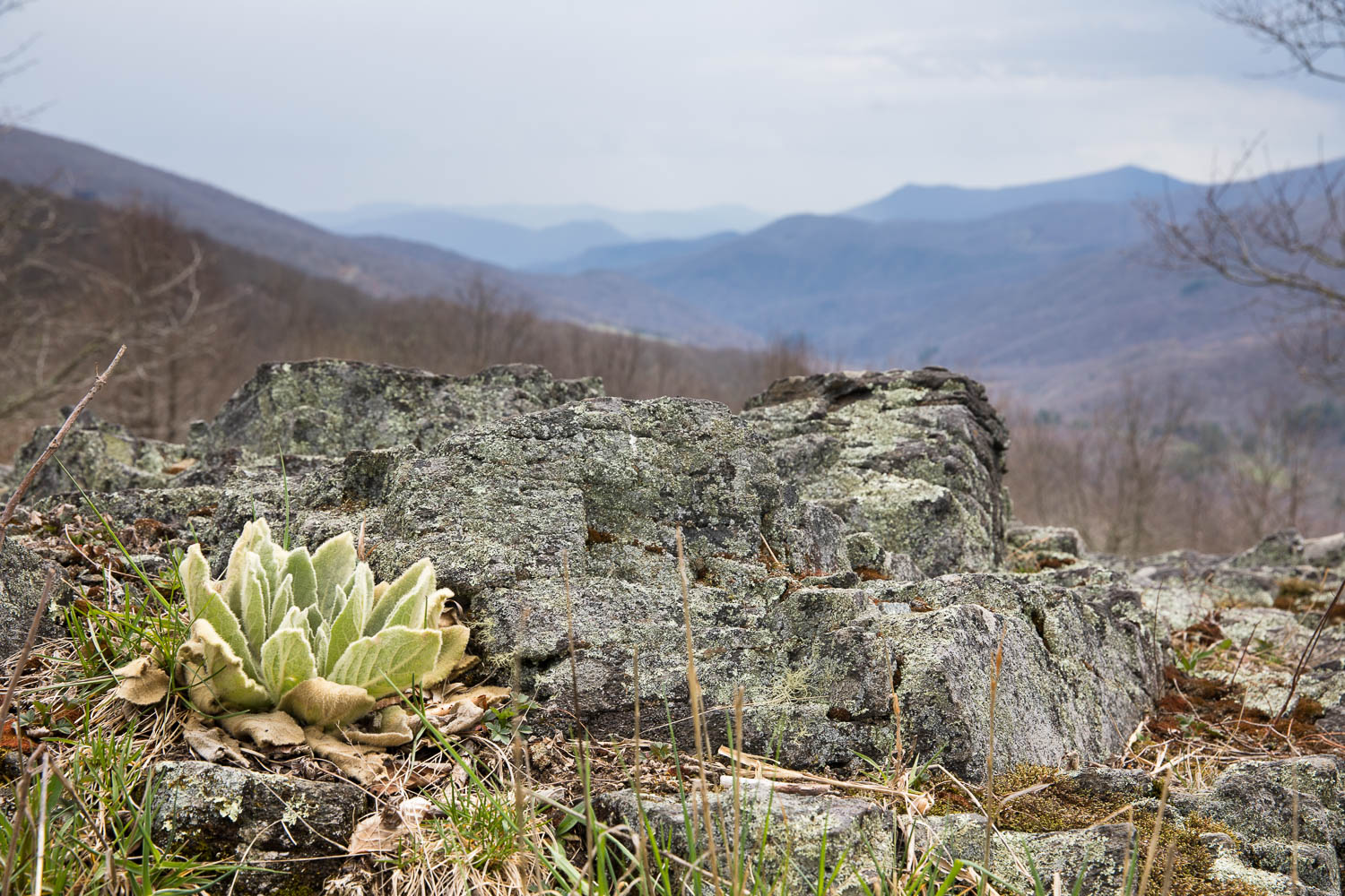 View from Appalachian Trail near Yellow Mountain Gap