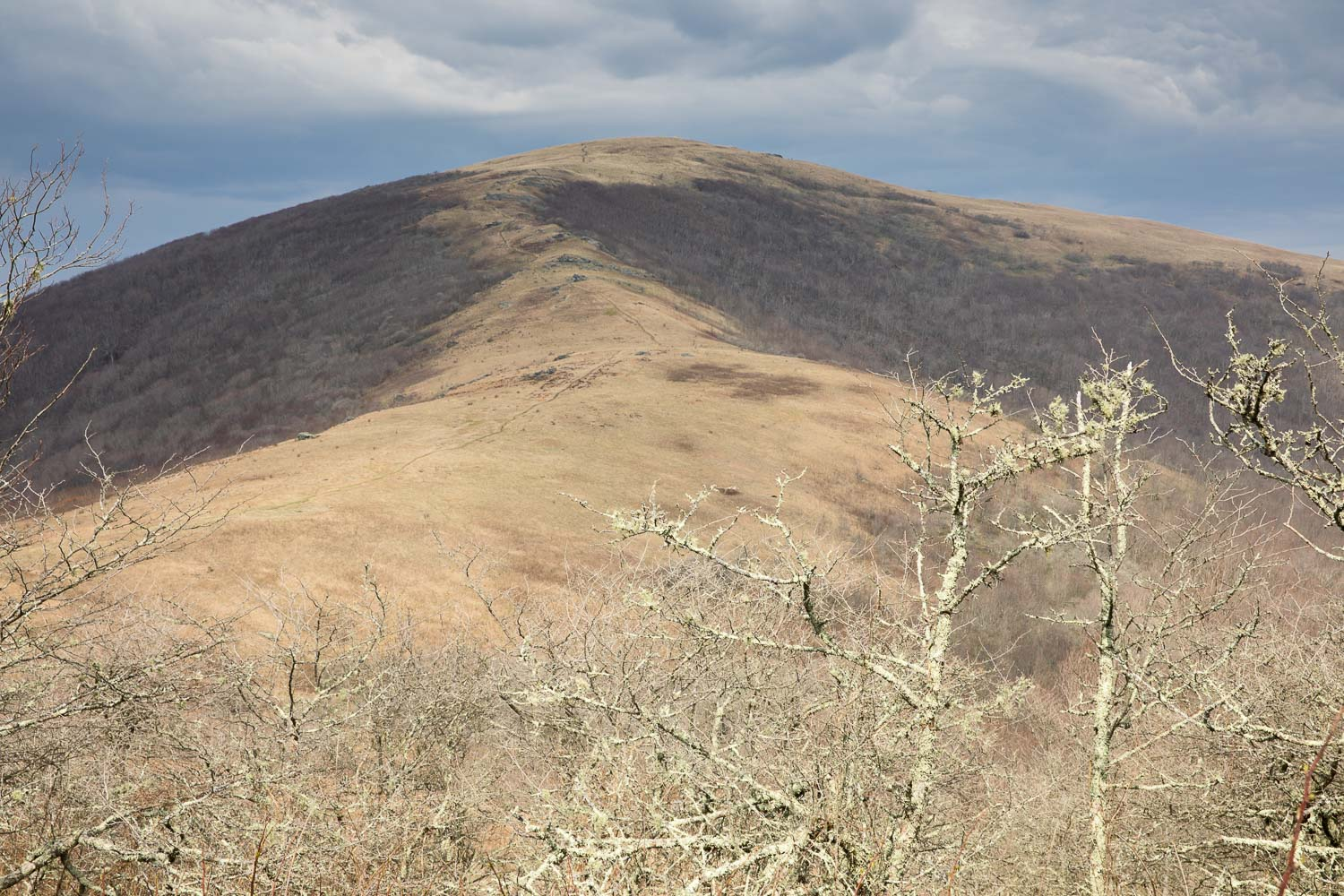 Hump Mountain, Appalachian Trail - yup, we had to hike up that thing