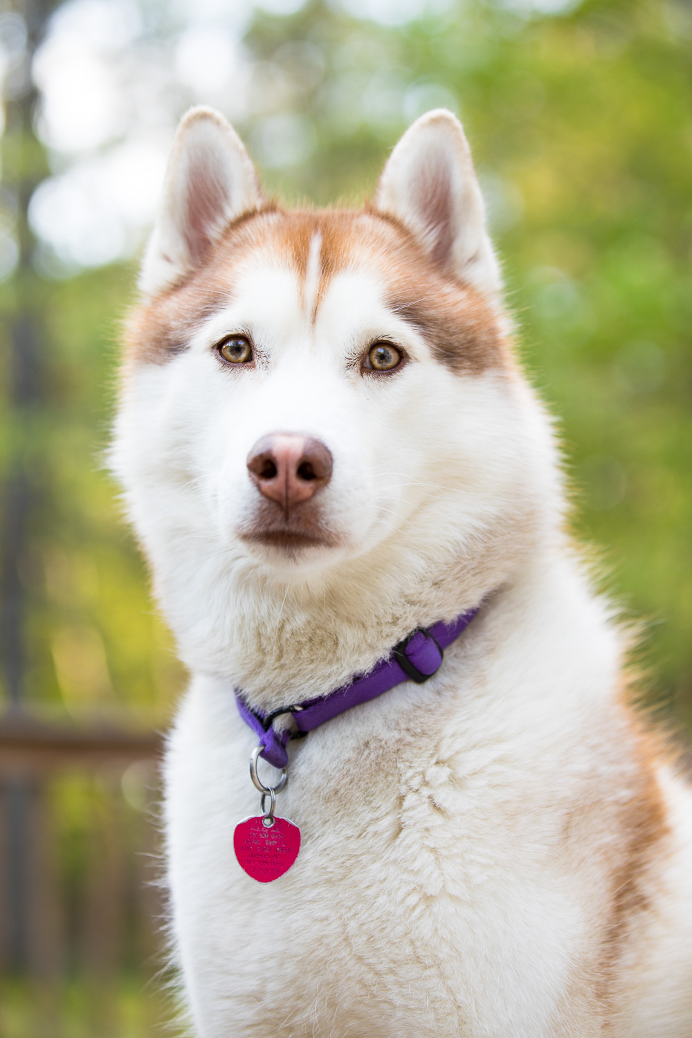 Ryder - Siberian Husky. Spoiled pup. Special talents include giving you dirty looks if you're not sharing your Bojangles with him. Secret weapon: fuzzy cuddles in a tent on a mountain. Bonafide weakness: FOMO.