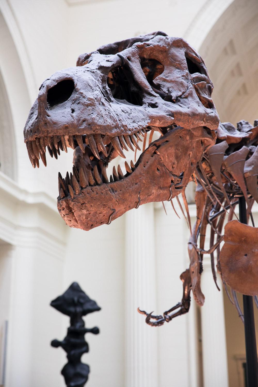 Sue the T. Rex