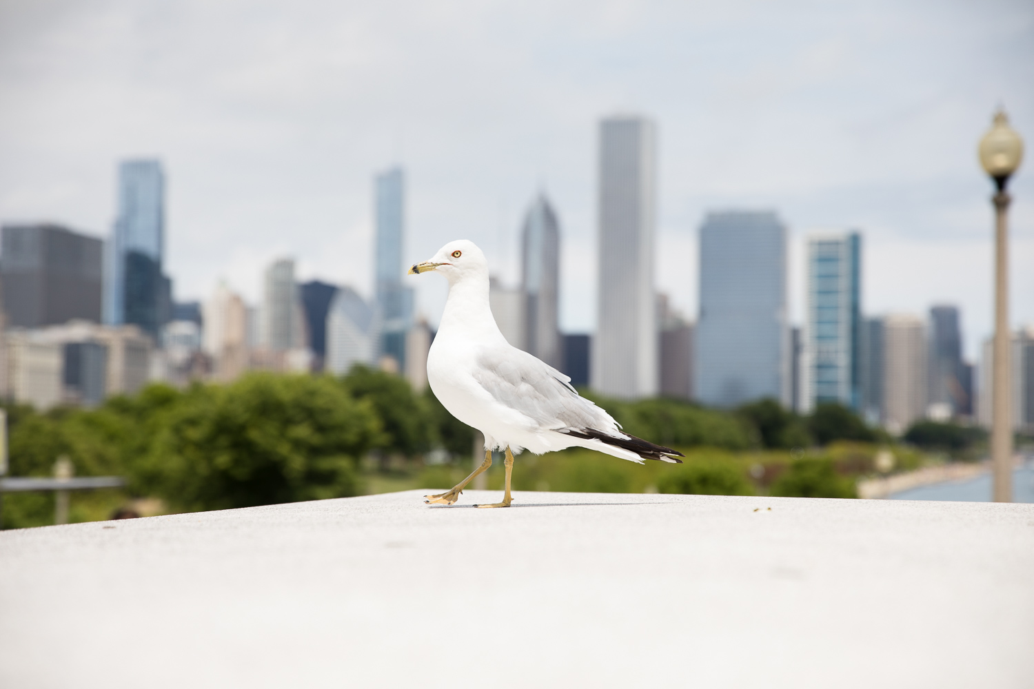Chicago is under attack by an evil giant gull!