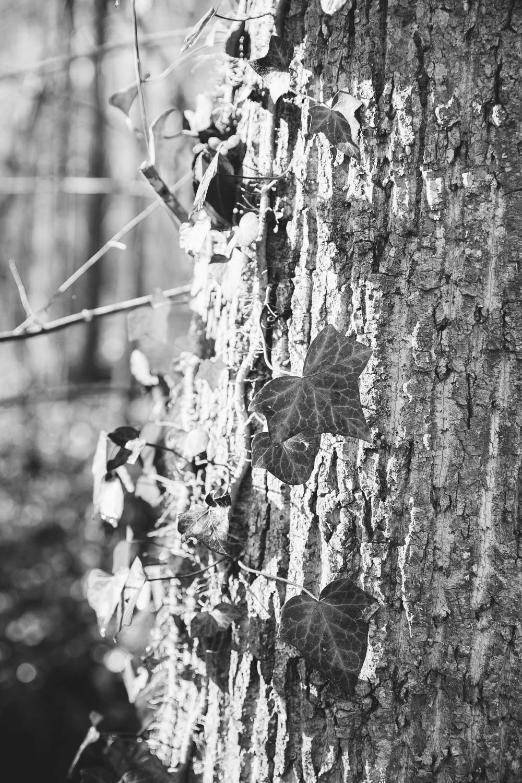 Battle Branch Trail - Chapel Hill, NC