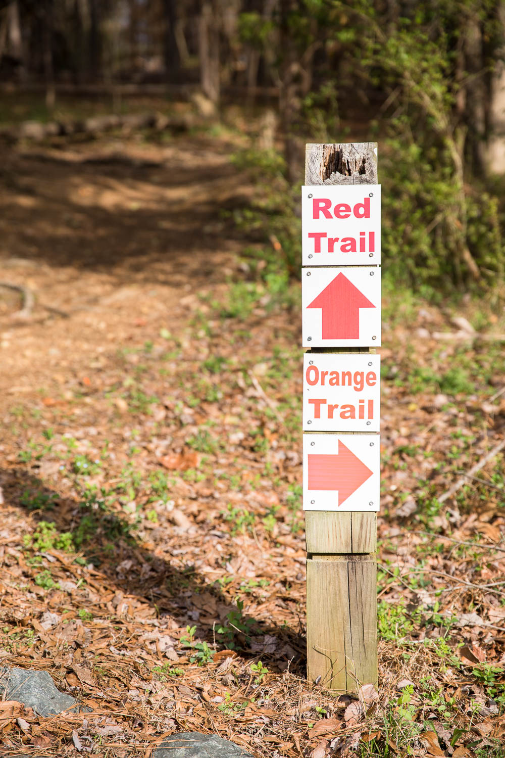 We took the Red Trail at Adams Tract in Carrboro
