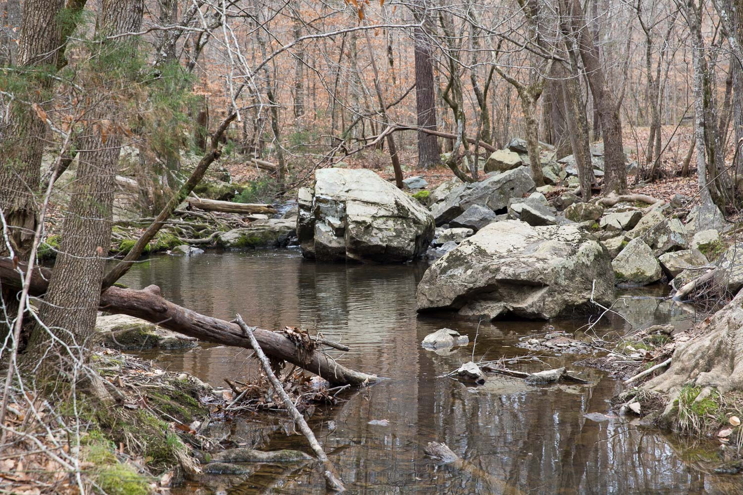 Adams Tract meets Bolin Creek in Carrboro
