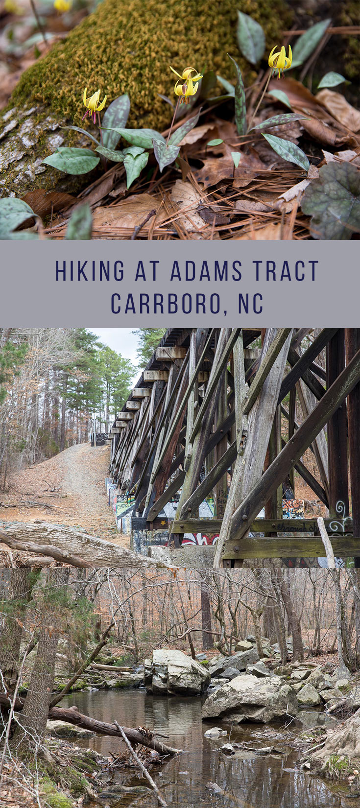 Adams Tract in Carrboro - 27 acre woodland preserve in Carrboro offers natural trail hiking along Bolin Creek