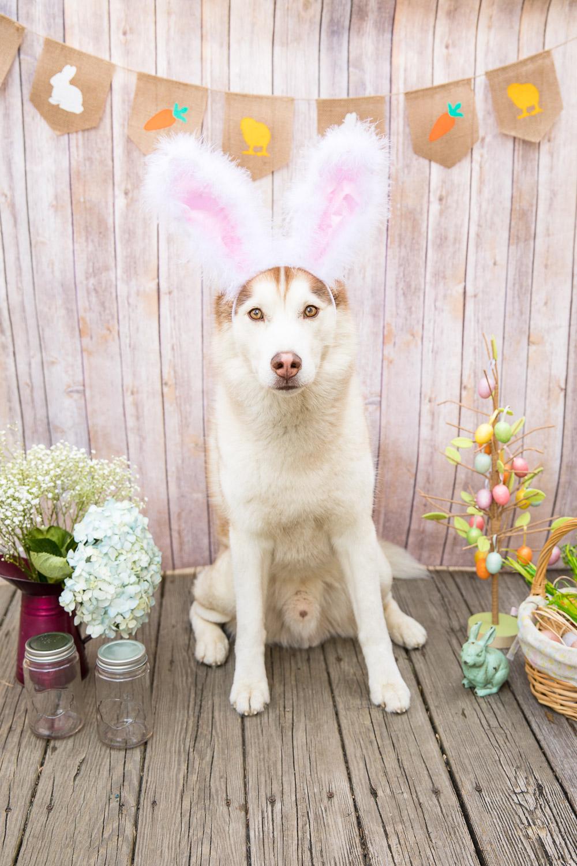 April 2018 Goals - Ryder Bunny