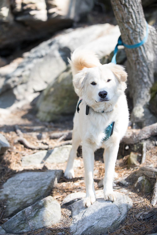 Echo, the super cool crag dog