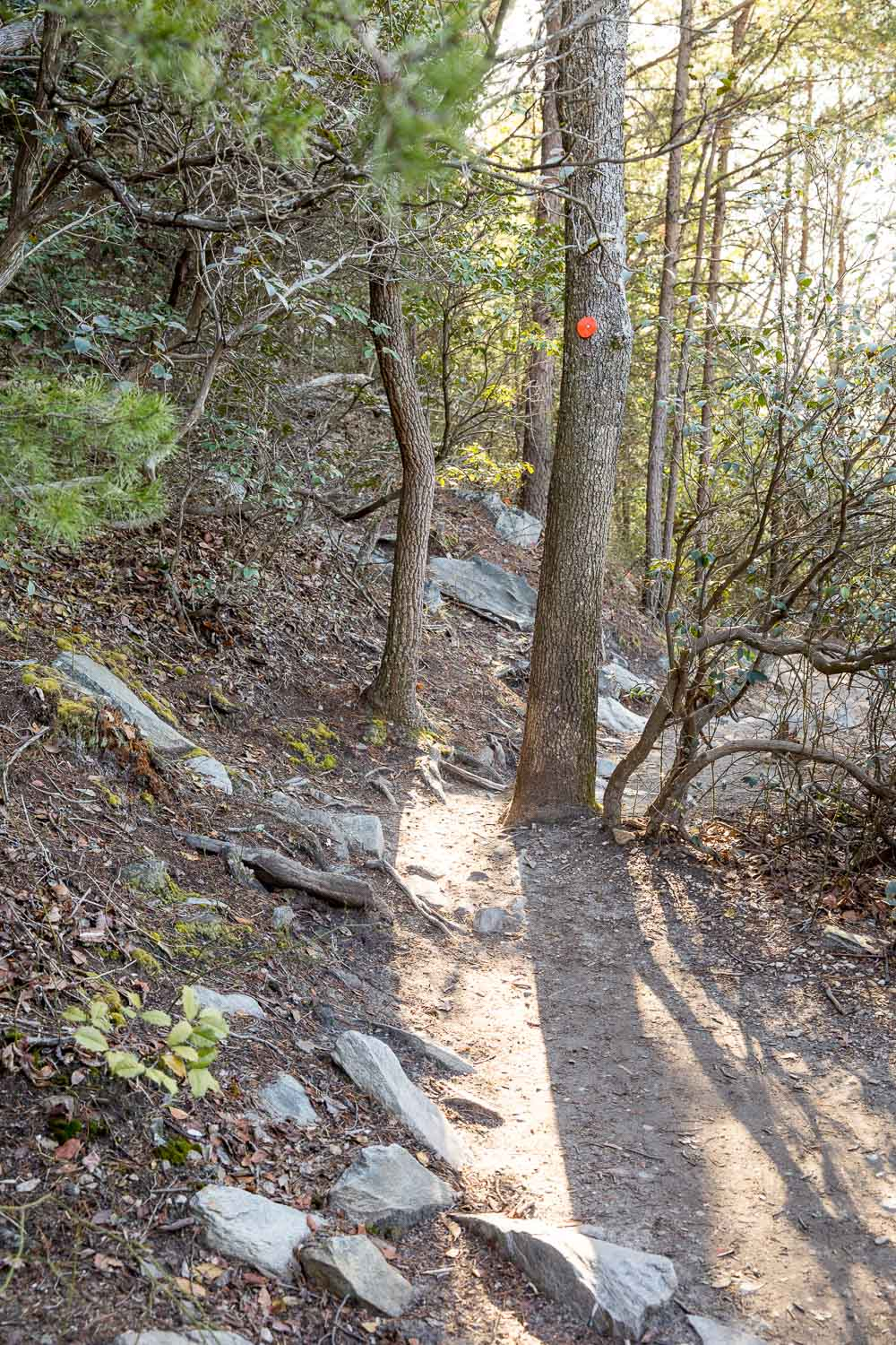 Trails here are well-maintained primitive hiking trails.