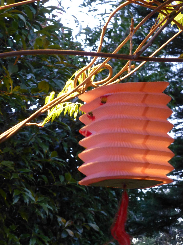 Lantern and wisteria