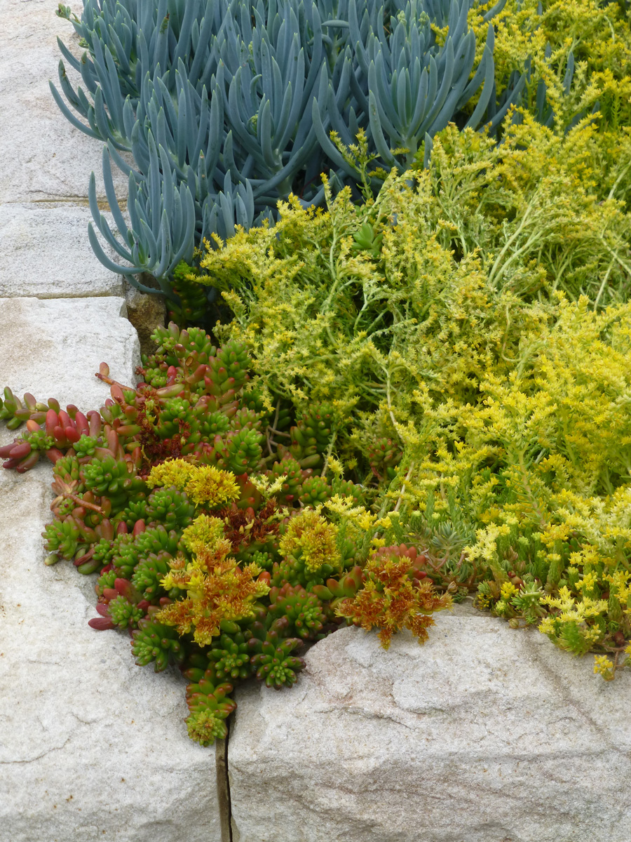 Most of the landscaping featured beautiful succulents in contrasting colours and textures. The plants complemented the sandstone beautifully.