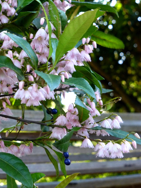 Spring-gums.jpg