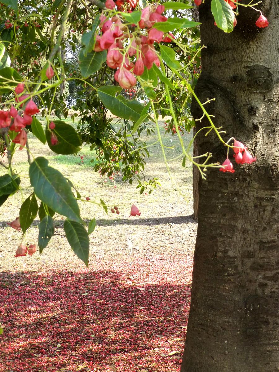pinkbells-2.jpg