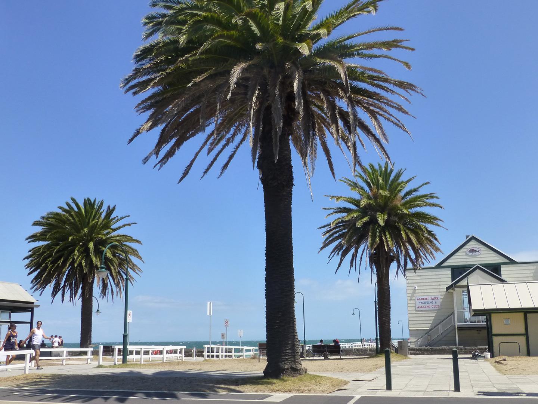 stkilda-beach1.jpg