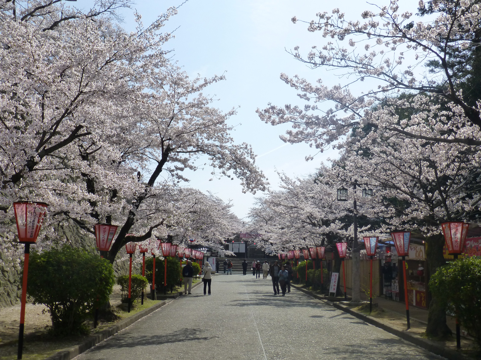 Sakura's, lanterns and festival stalls line the approach to Tsuyama Castle
