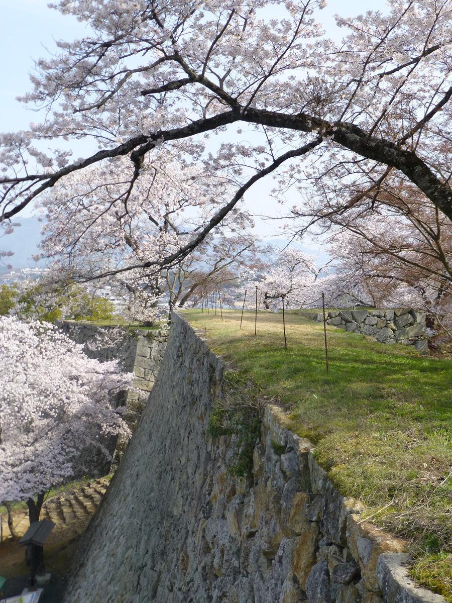 tsuyama-hanami4.jpg
