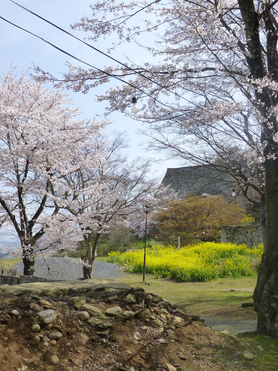 tsuyama-hanami6.jpg