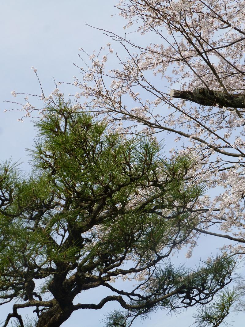 Tsuyama-garden-5.jpg