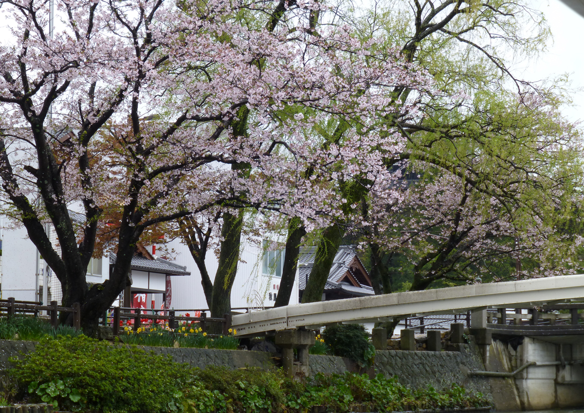Matsue-canal7.jpg