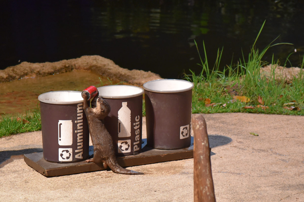 The recycling demo from the resident sea otter was rather cute.