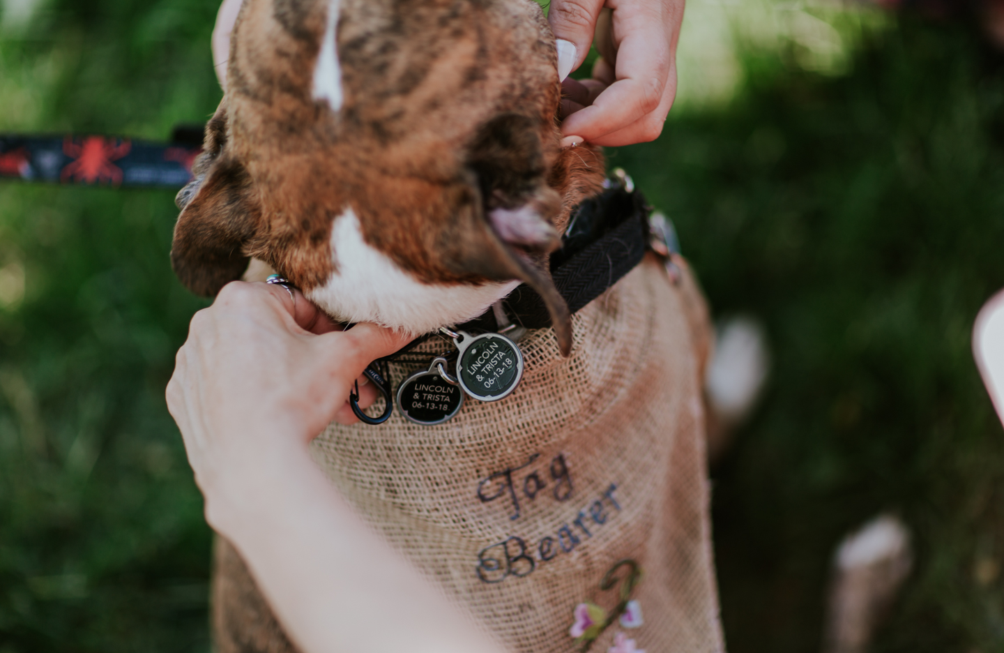 lola-grace-photography-dog-intimate-wedding-6.jpg