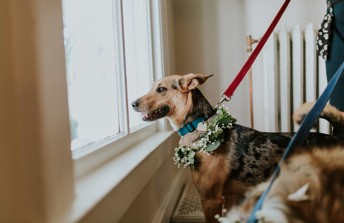 lola-grace-photography-dog-intimate-wedding-9.jpg