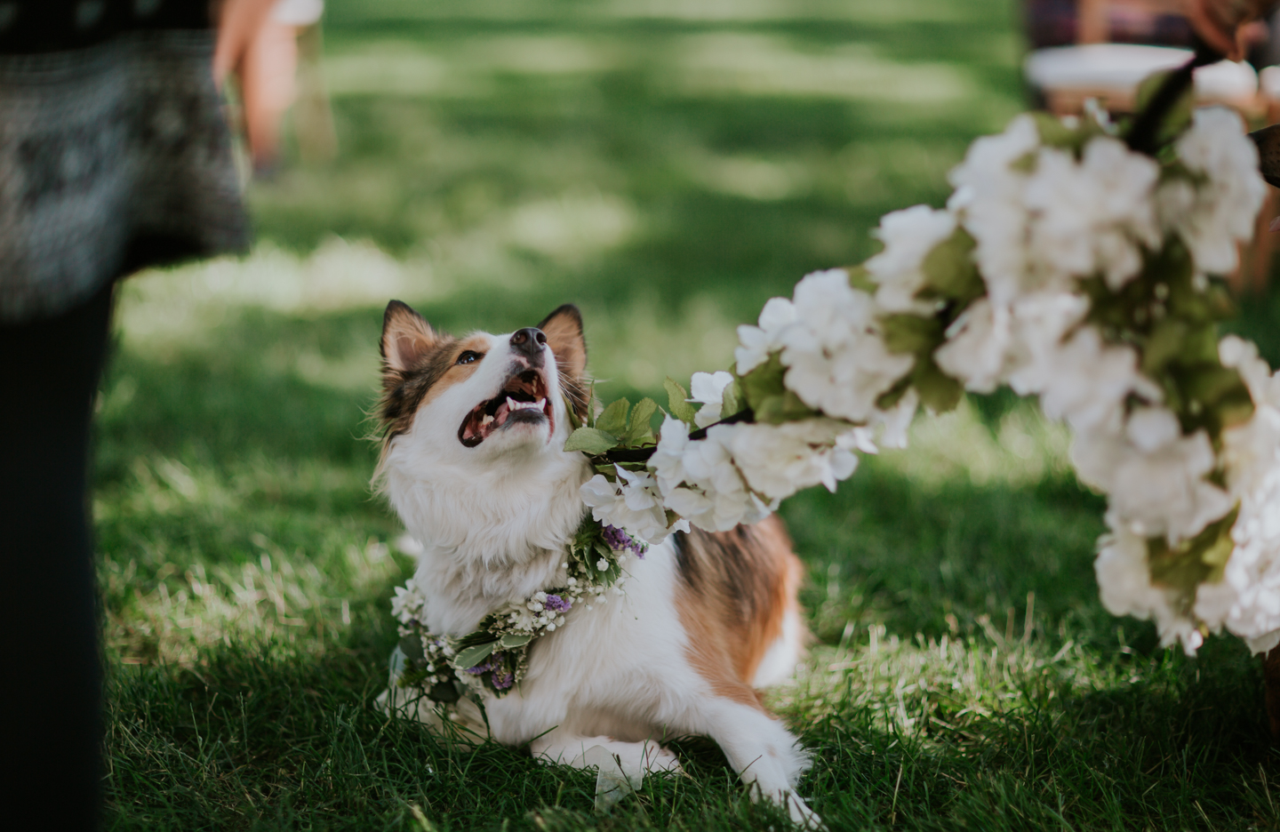 lola-grace-photography-dog-intimate-wedding-15.jpg