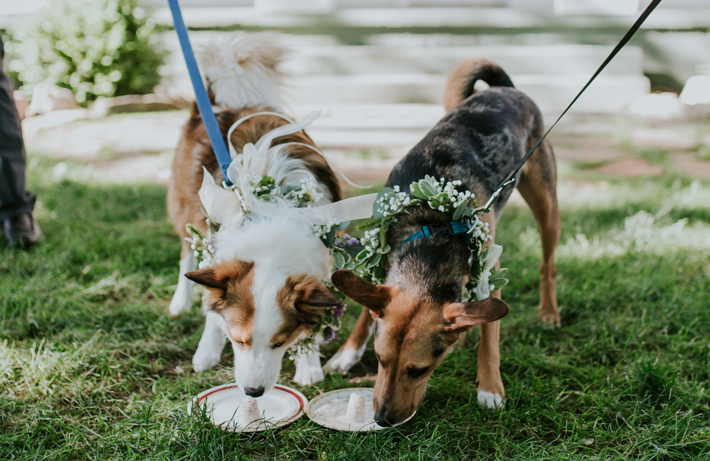 lola-grace-photography-dog-intimate-wedding-17.jpg