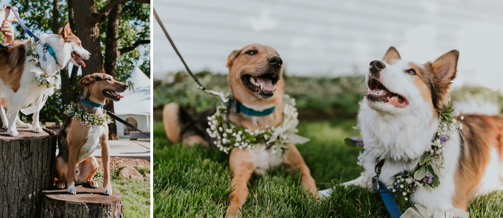 lola-grace-photography-dog-intimate-wedding-22.jpg
