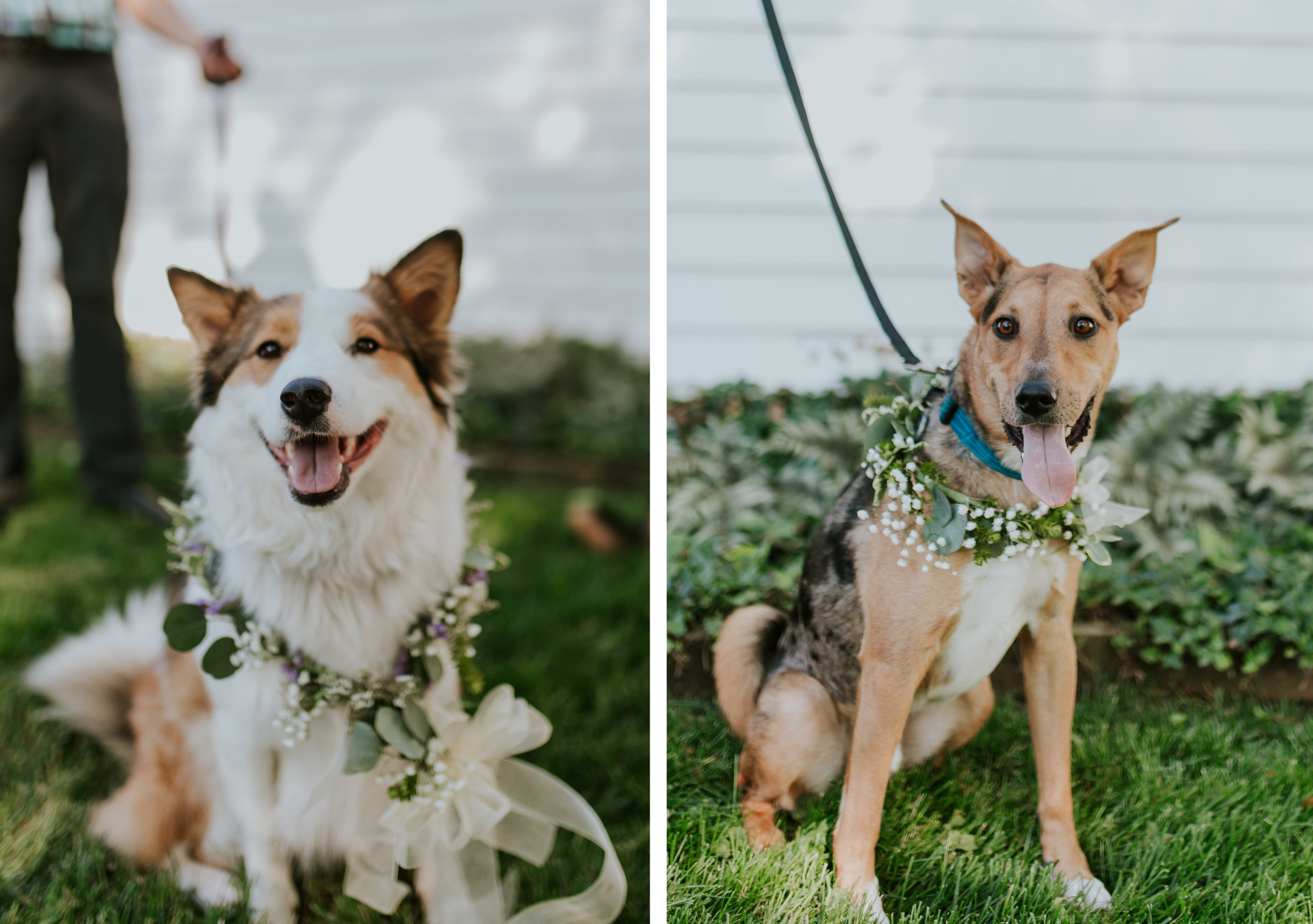 lola-grace-photography-dog-intimate-wedding-21.jpg