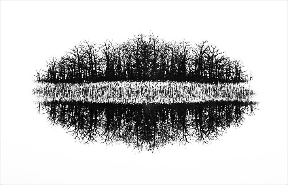 """Wood Spirit    Photo etching  22 1/2"""" x 14"""""""