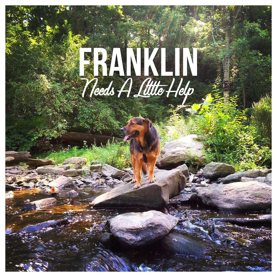 Help Franklin.jpg