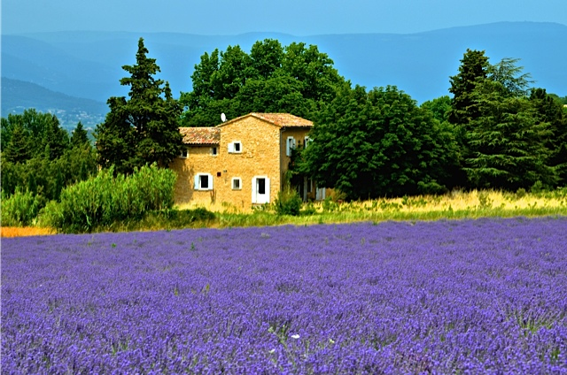 lavender by floyd.jpg