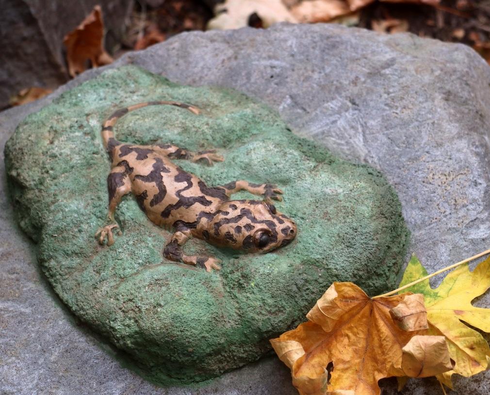 cast concrete giant pacific salamander