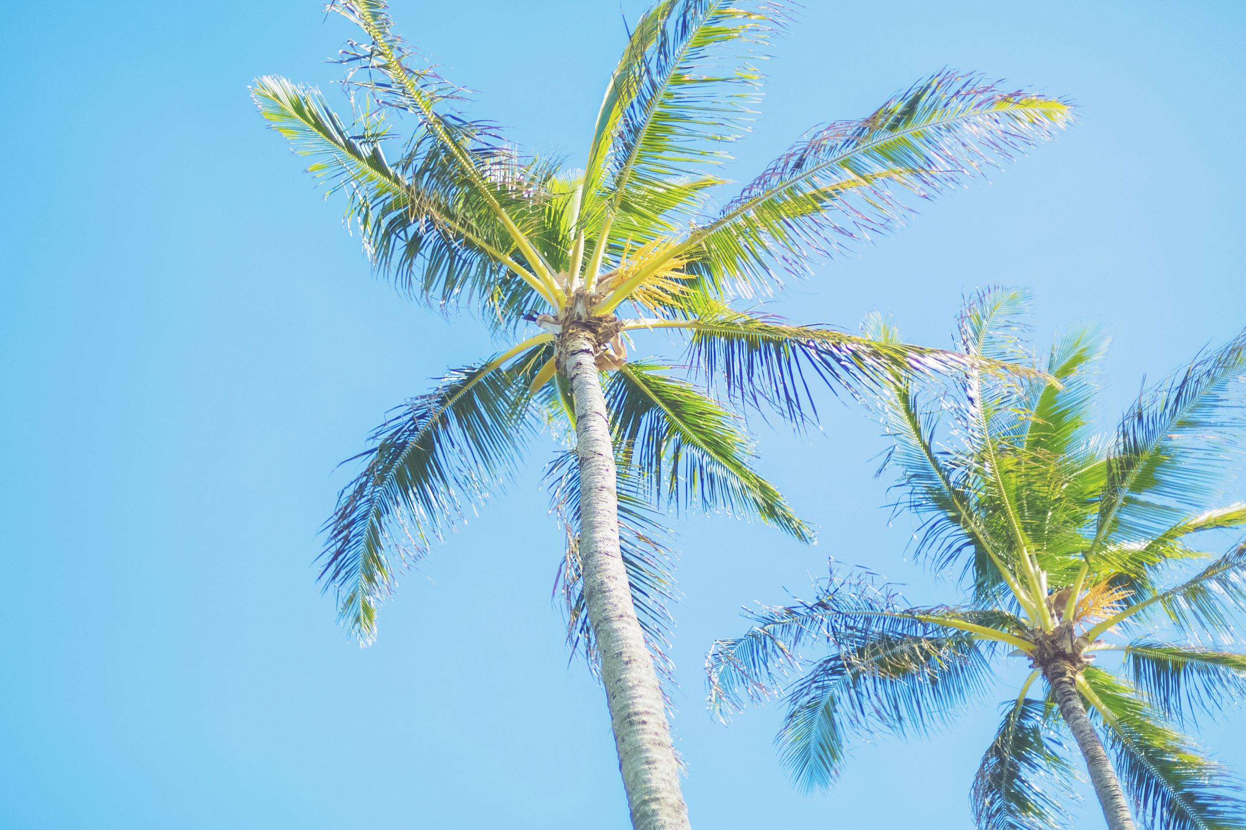 angie-diaz-photography-maui-honeymoon-hawaii-elopement-14.jpg