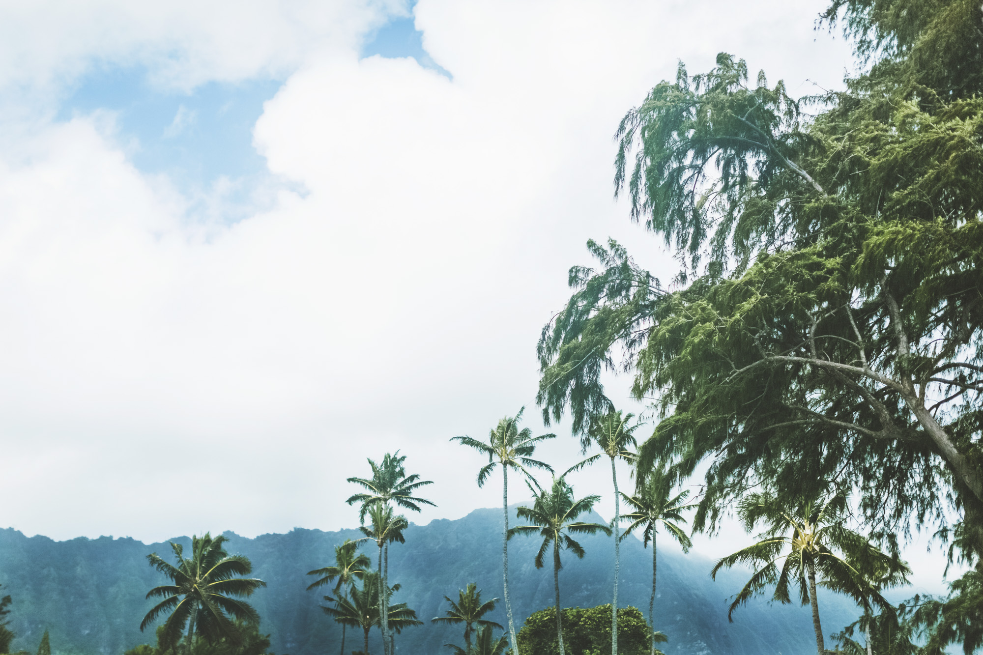 hawaii maui engagement photographer_70.jpg