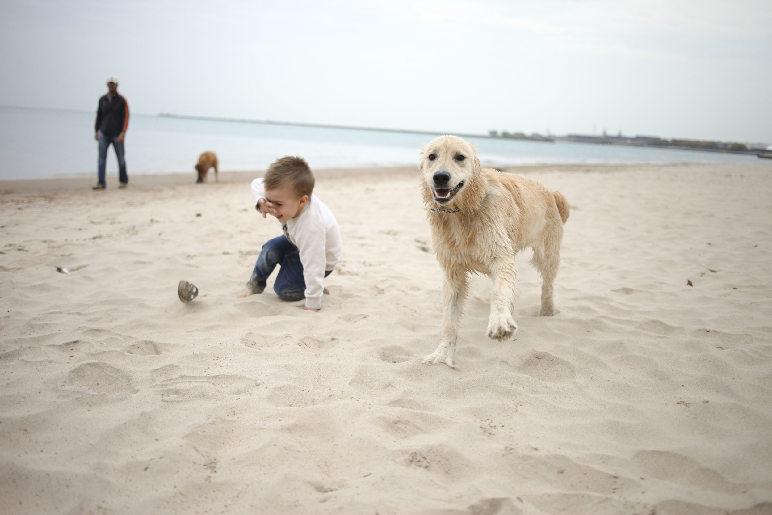 Jude loves Dogs. This dog loved him and his shoe right back.