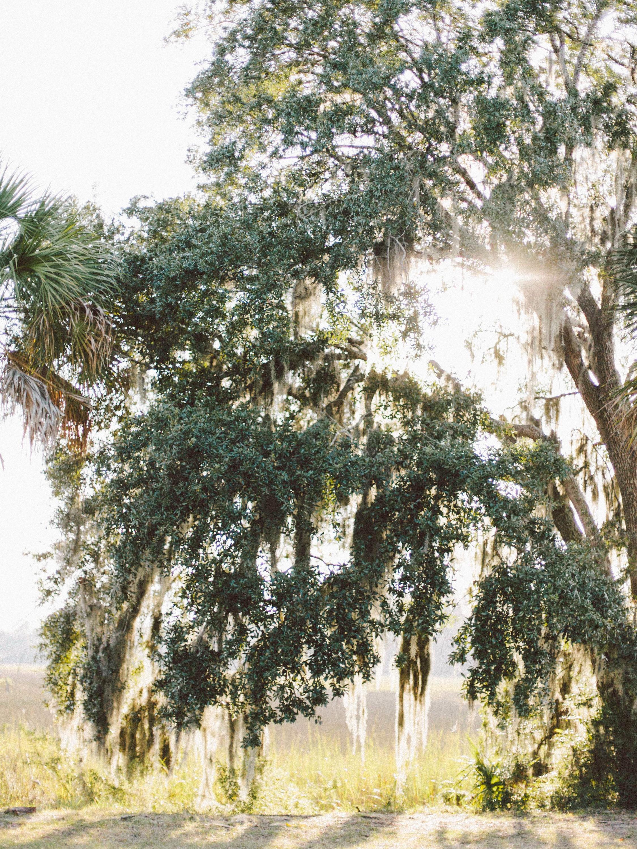 Savannah-Savannah-0001.jpg