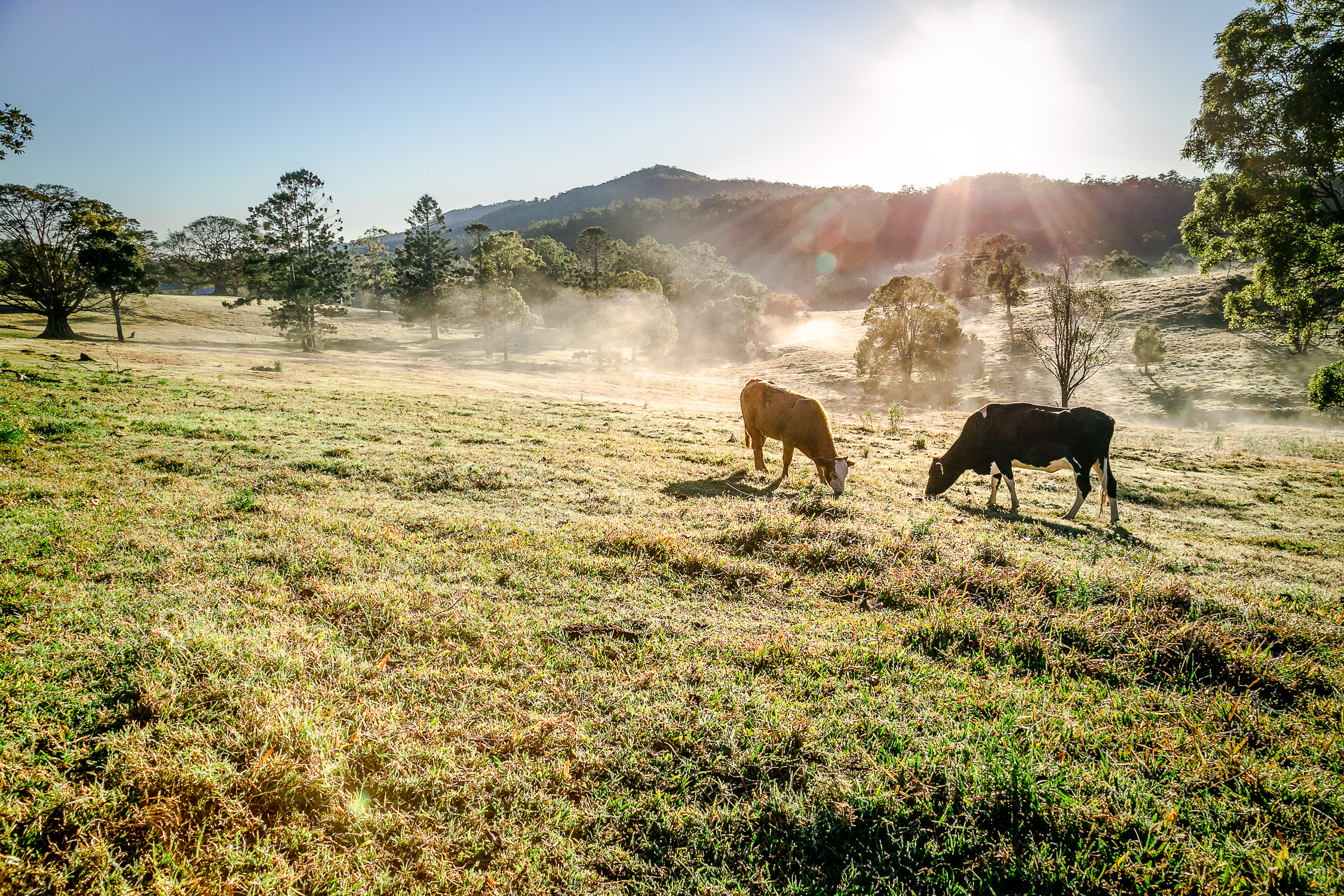 Gold_Coast_Hinterland_Barn_Wedding_Cowbell_Creek_Farm_True_North_Photography-8.jpg