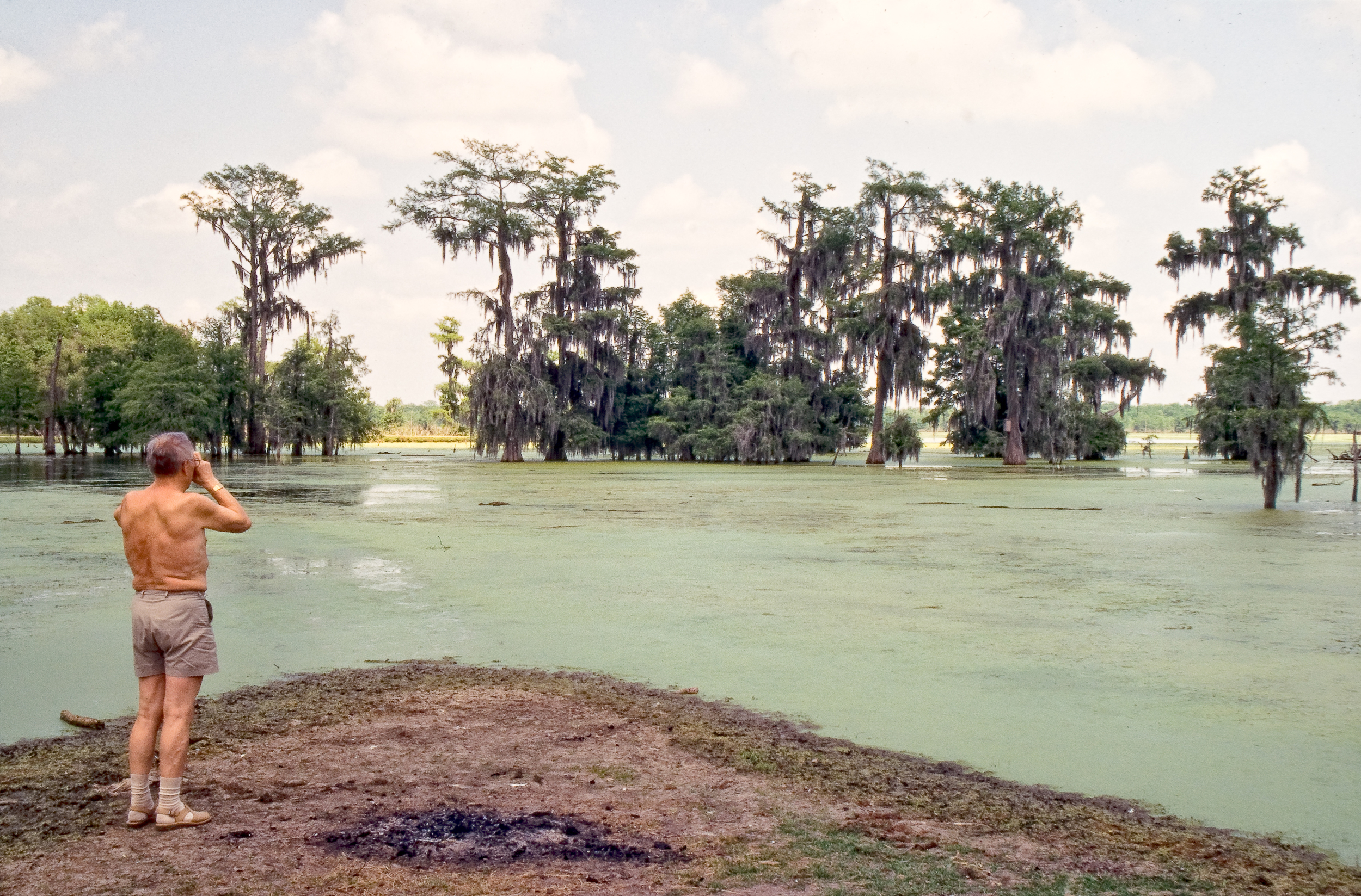 My father photographing cypress trees in the swamp in Lafayette,  Louisiana, USA in 1995