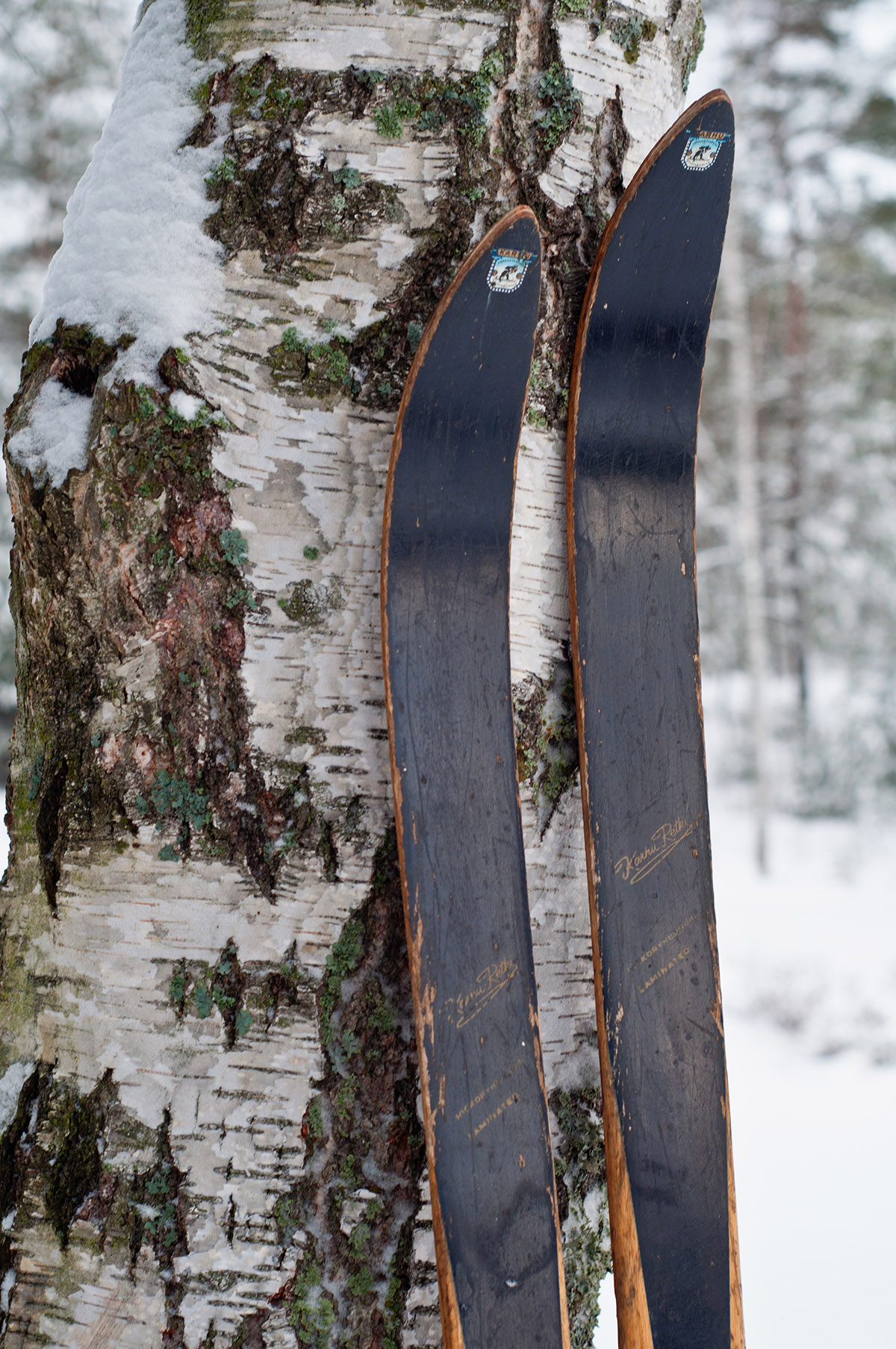 Old style cross country skiis against a trunk of an old birch tree - Nauvo Archipelago, Finland