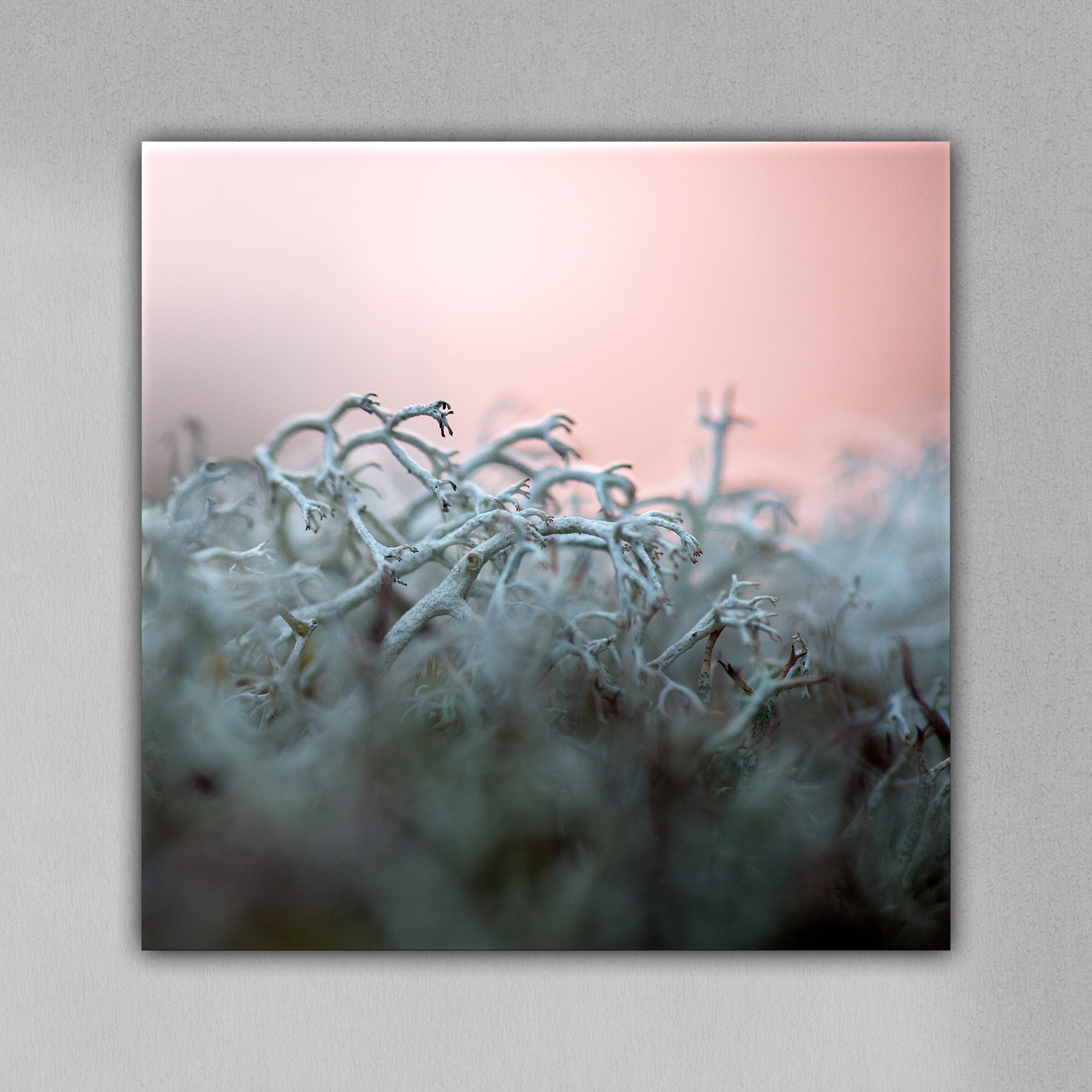 MOSS DANCERS OF THE ARCHIPELAGO SEA · 1st edition 30x30 cm Aluminum Resin Print   AVAILABLE FOR PURCHASE
