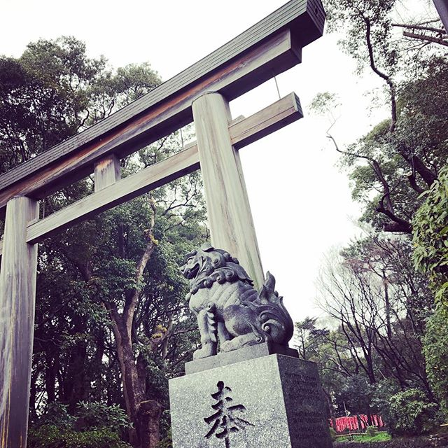 Torii and Komainu at Gokoku Jinja Shrine  #MorningRun 🏃🏻 #Torii #Shrine #Jinja #Komainu #Japan #鳥居⛩ #狛犬 #護国神社