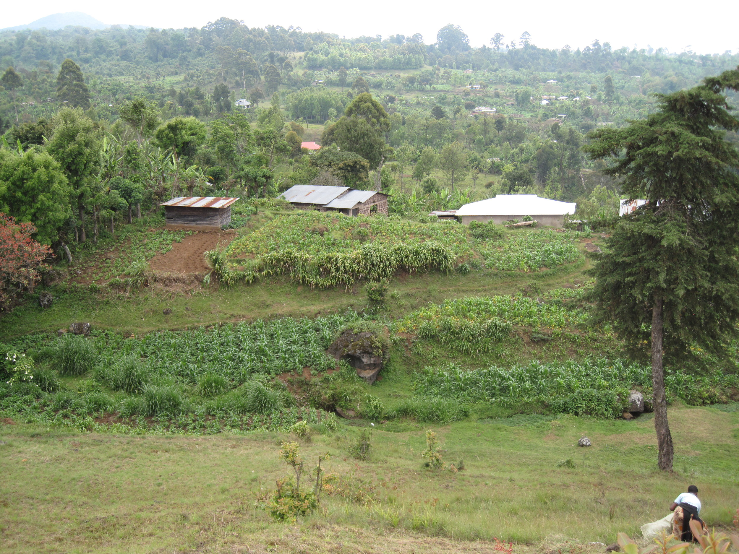 A view back over Mbahe Cottages and Simon's land