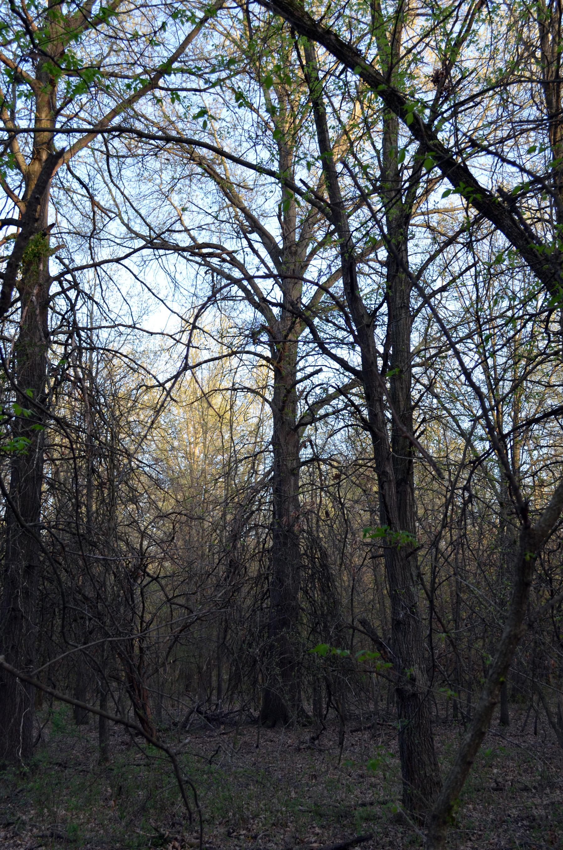 dead trees.jpg