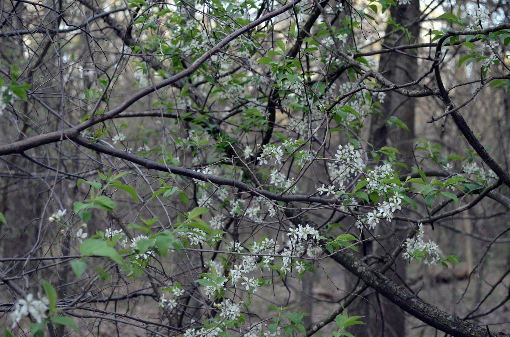 tree flowers.jpg