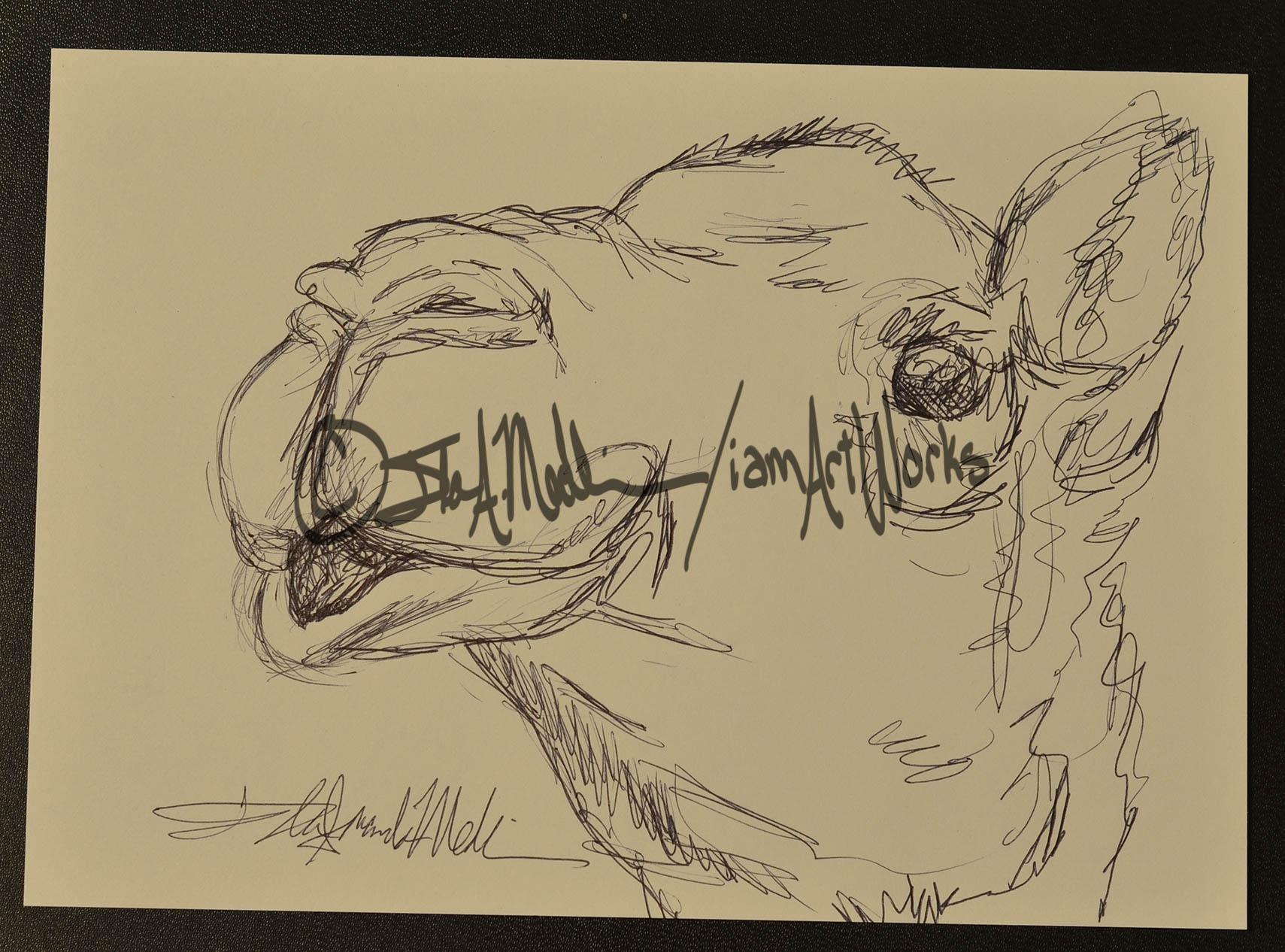 pen camel.jpg