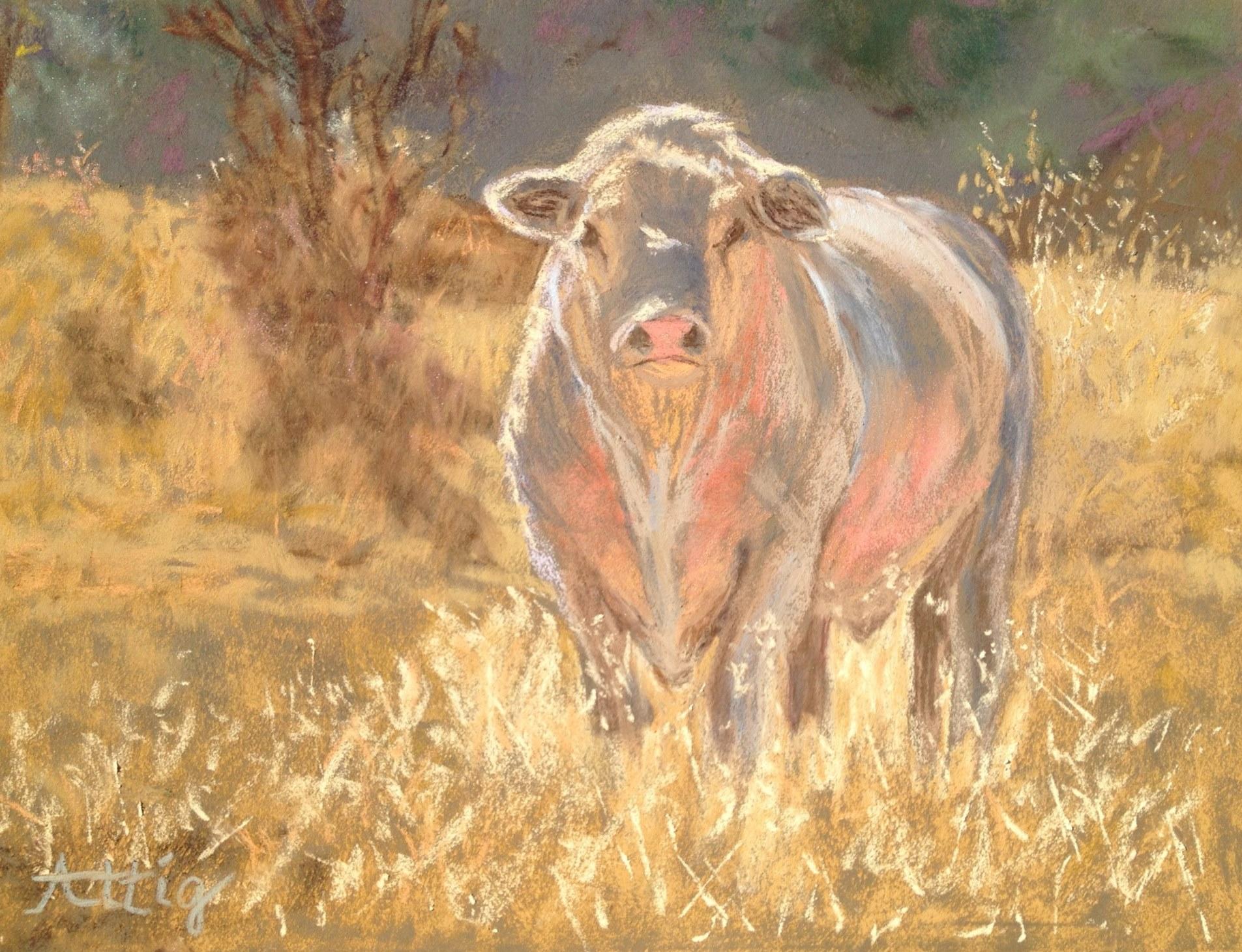 "Day 2: ""Charolais Bull, Blue Moon Ranch"" 9"" x 12"" $495"