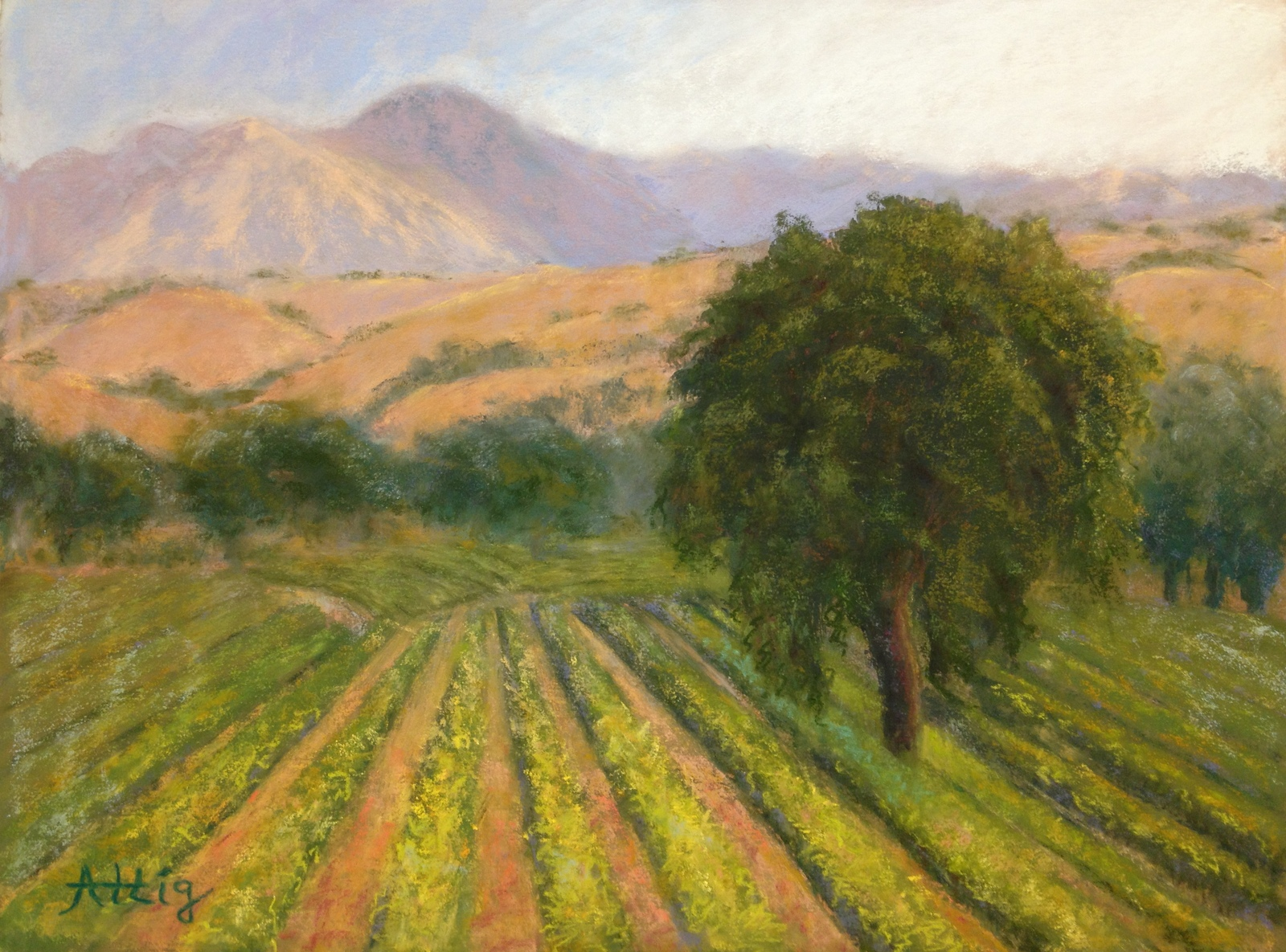 """""""Drive By Vineyard"""" 12"""" x 16"""" SOLD"""